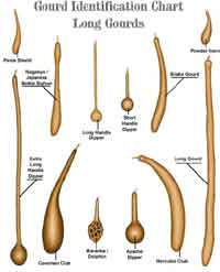 Gourd Identification Chart