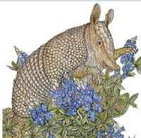 Armadillo and Flowers