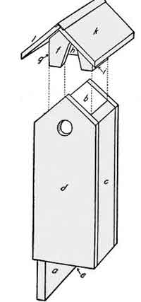 Flicker bird house plan
